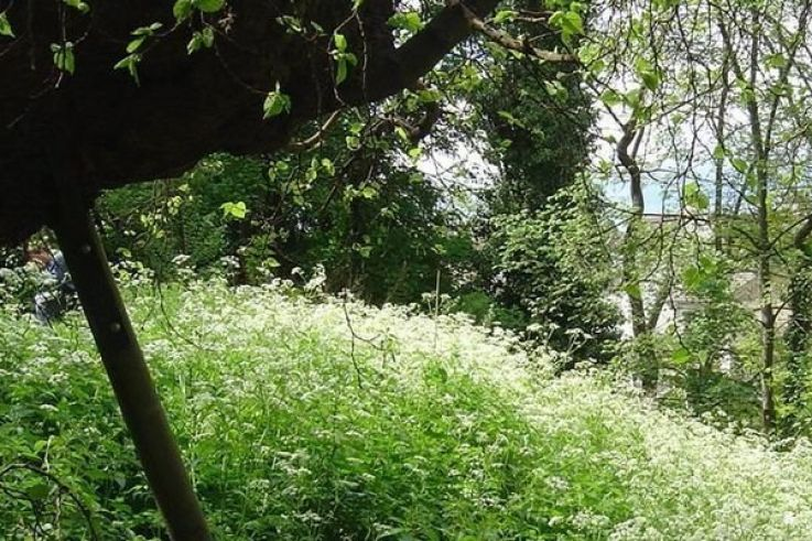 Visite Du Jardin Sauvage Saint Vincent Loisirs Sortiraparis Com
