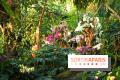 1001 orchidées 2015 au Jardin des Plantes