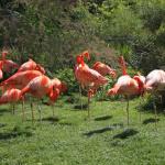 La m nagerie du jardin des plantes le plus vieux zoo de paris - Menagerie du jardin des plantes tarif ...