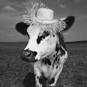 Oh la Vache ! Une exposition de Mondino à la Milk Factory