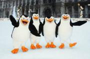 es Pingouins de Madagascar inaugurent la patinoire de l'Hôtel de Ville