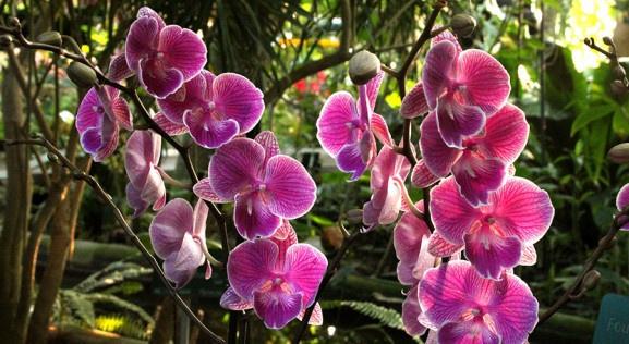 Mille & une orchidées au Jardin des Plantes