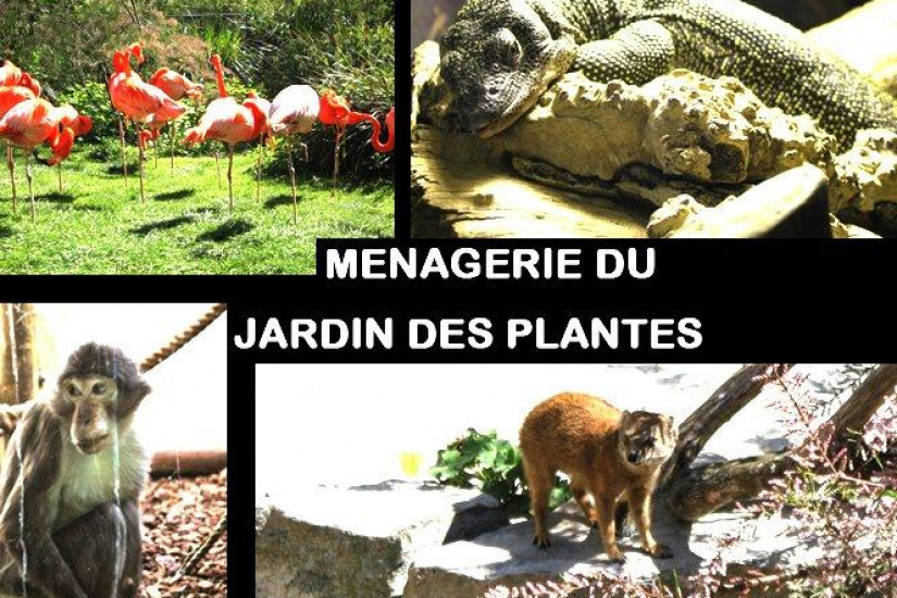 M nagerie the zoo of the jardin des plantes the oldest - Menagerie du jardin des plantes tarifs ...