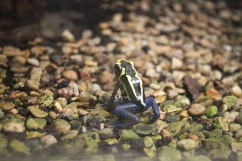 La m nagerie du jardin des plantes le plus vieux zoo de paris - Zoo du jardin des plantes tarifs ...