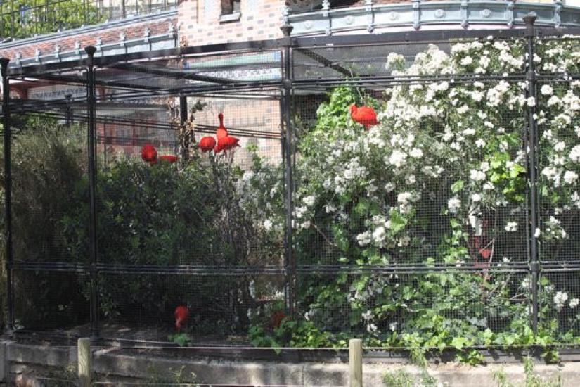 la m nagerie du jardin des plantes le plus vieux zoo de paris. Black Bedroom Furniture Sets. Home Design Ideas