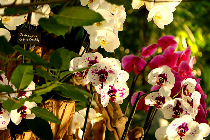 Mille et une orchid es 2018 l 39 expo vente du jardin des for Exposition jardin paris 2016