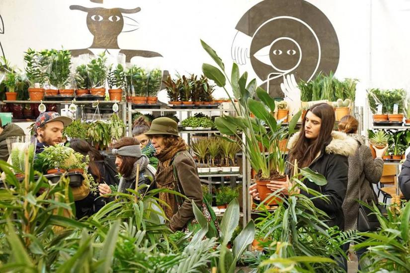 Nouvelle grande vente de plantes au caf a paris les 10 for Vente de plantes