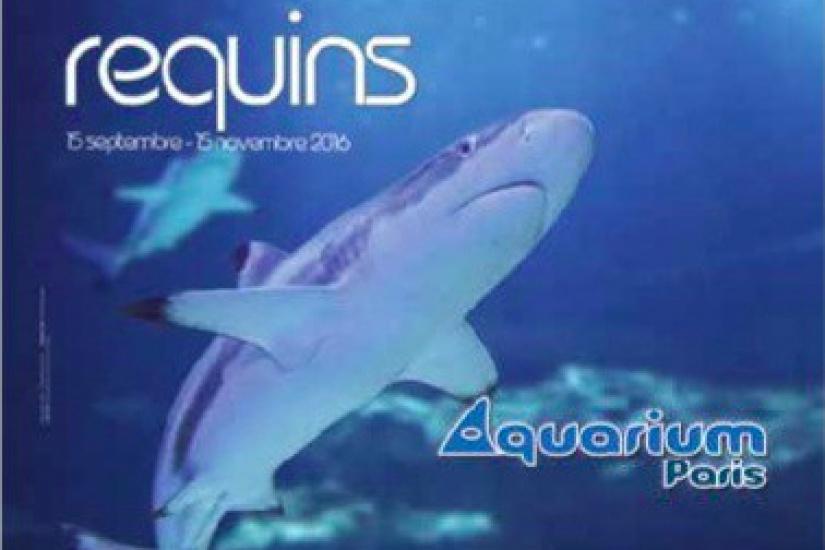 aquarium 100l pas cher beautiful aquarium pas cher jardiland poitiers murale ahurissant. Black Bedroom Furniture Sets. Home Design Ideas