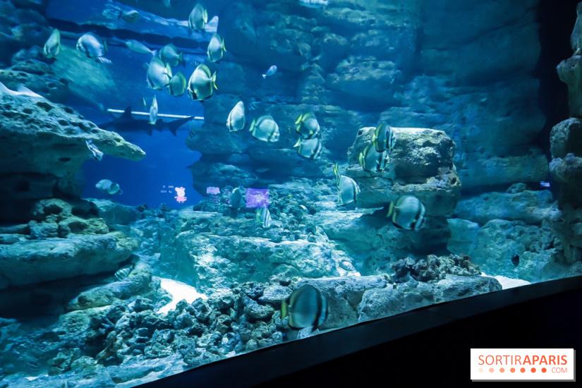 peppa pig s 39 installe l 39 aquarium de paris gagnez vos invitations. Black Bedroom Furniture Sets. Home Design Ideas