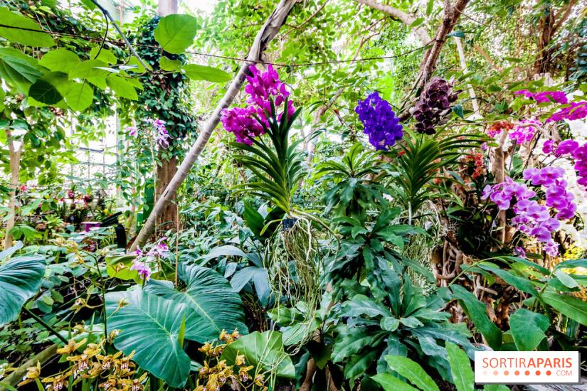 mille et une orchid es 2018 au jardin des plantes. Black Bedroom Furniture Sets. Home Design Ideas