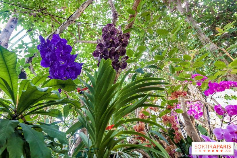 A thousand and one orchids 2018 at paris jardin des for Au jardin des plantes poem