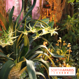 album photos exposition mille une orchid es au jardin des plantes. Black Bedroom Furniture Sets. Home Design Ideas