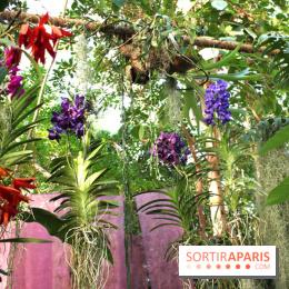 Album photos exposition mille une orchid es au jardin - Exposition dinosaures jardin des plantes ...