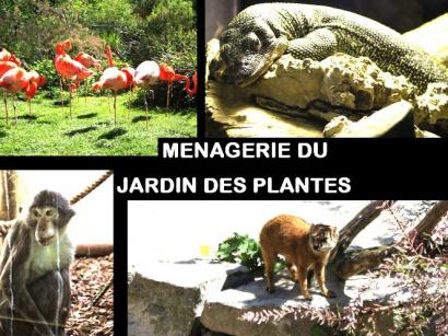 Exposition nuit au mus um national d 39 histoire naturelle - Jardin des plantes paris dinosaures ...
