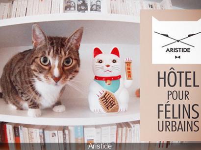 le caf des chats le premier bar chats fran ais paris ferm. Black Bedroom Furniture Sets. Home Design Ideas