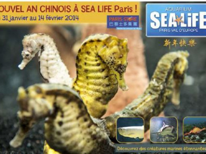 Le Nouvel An Chinois à  l'Aquarium Sea Life Paris Val d'Europe