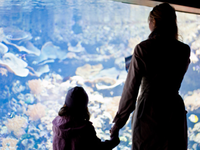 Fête des Mères 2016 : l'Aquarium de Paris organise son brunch
