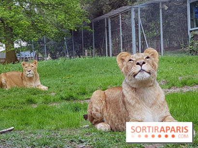 Zoo de Thoiry 2018 : les photos