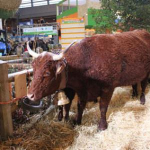 Salon exposition paris actu agenda bons plans guide for Place gratuite salon de l agriculture