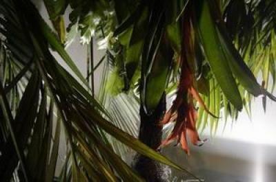 Programme Tropico-Végétal Henrik Hakansson, A travers bois pour trouver la forêt