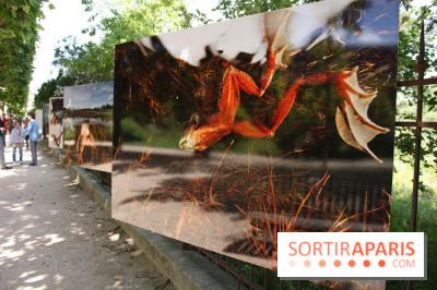 Exposition Planète Grenouille par Cyril Ruoso au Jardin des Plantes