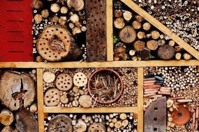 Atelier de fabrication, Refuge, Insecte