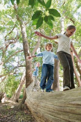 Promenons-nous dans les bois, Nature & Découvertes