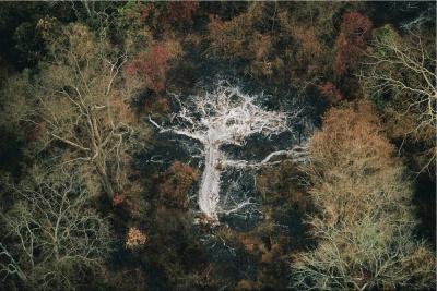 Cendres d'un arbre près de monts Gorohoui Kongoli, Côte d'Ivoire, Yann Arthus-Bertrand