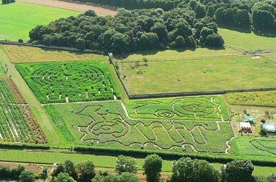 labyrinthes de gally, labyrinthe de gally
