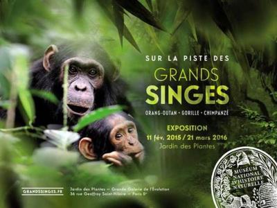 Grands Singes dans la Grande Galerie de l'Evolution