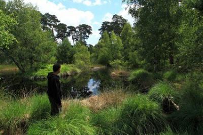 visite des mares dans la Forêt de Fontainebleau