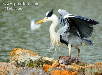 Fête de la nature 2016 : une balade au bord du Lac Daumesnil