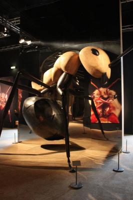 Mille milliards de fourmis, l'exposition au Palais de la Découverte