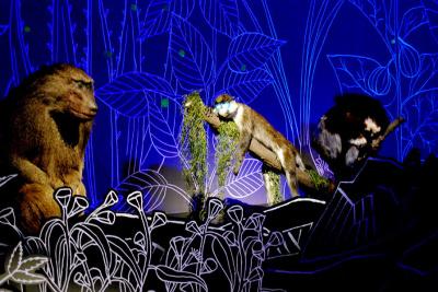 Exposition Nuit au Muséum national d'Histoire naturelle