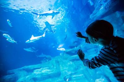 L'Aquarium de Paris lance son Pass 4 personnes pour l'été