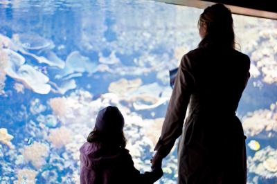 L'Aquarium de Paris fête ses 10 ans avec 2 week-end gratuit pour les parents