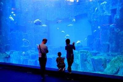 Entrées gratuites à l'Aquarium de Paris pour la Journée Internationale des Séniors
