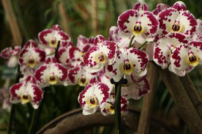 Exposition Mille & une orchidées 2017 au Jardin des Plantes