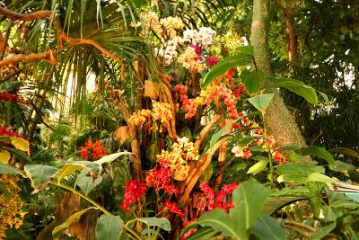 mille et une orchid es 2018 l 39 expo vente au jardin des plantes. Black Bedroom Furniture Sets. Home Design Ideas
