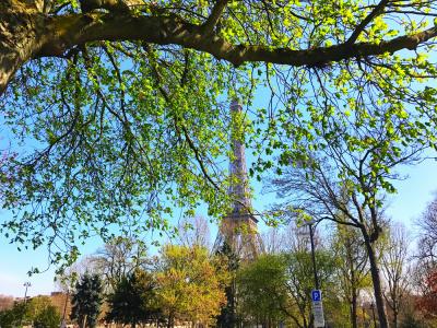 La Fête de l'Arbre à Paris !