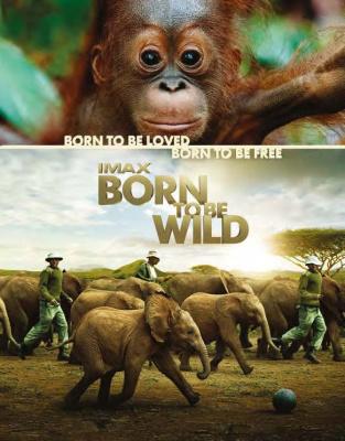 born to be wild, nés pour être libre à la Géode