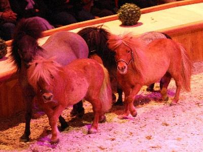Le Musée vivant du Cheval, les poneys font leur show