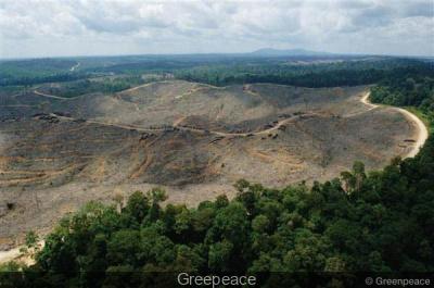 Greenpeace contre la déforestation Place du Plais Royal à Paris