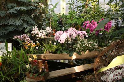 Exposition mille &; une orchidées au jardin des plantes