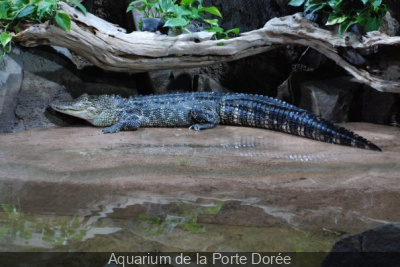 Aquarium de la Porte Dorée