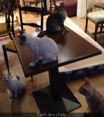 Le Café des chats, le premier bar à chats français à Paris