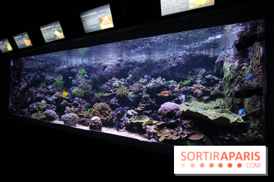 Rencontres sauvages aquarium porte doree