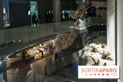 Aquarium de Paris : La Fabrique des profondeurs, l'exposition de Lionel Sabatté