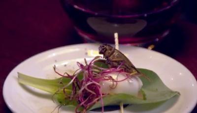 Le Festin Nu : le bar où manger des insectes à Paris