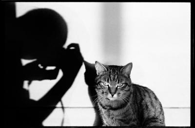 Le chat et ses photographes, l'expo miaou de la MEP